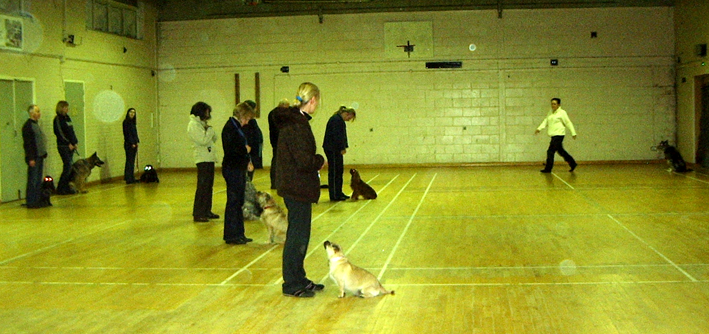 Dog Training Gpca Harlow